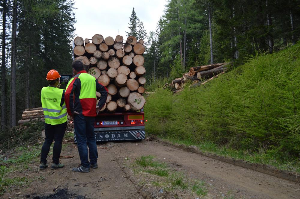 Holzvermarktung und Logistic
