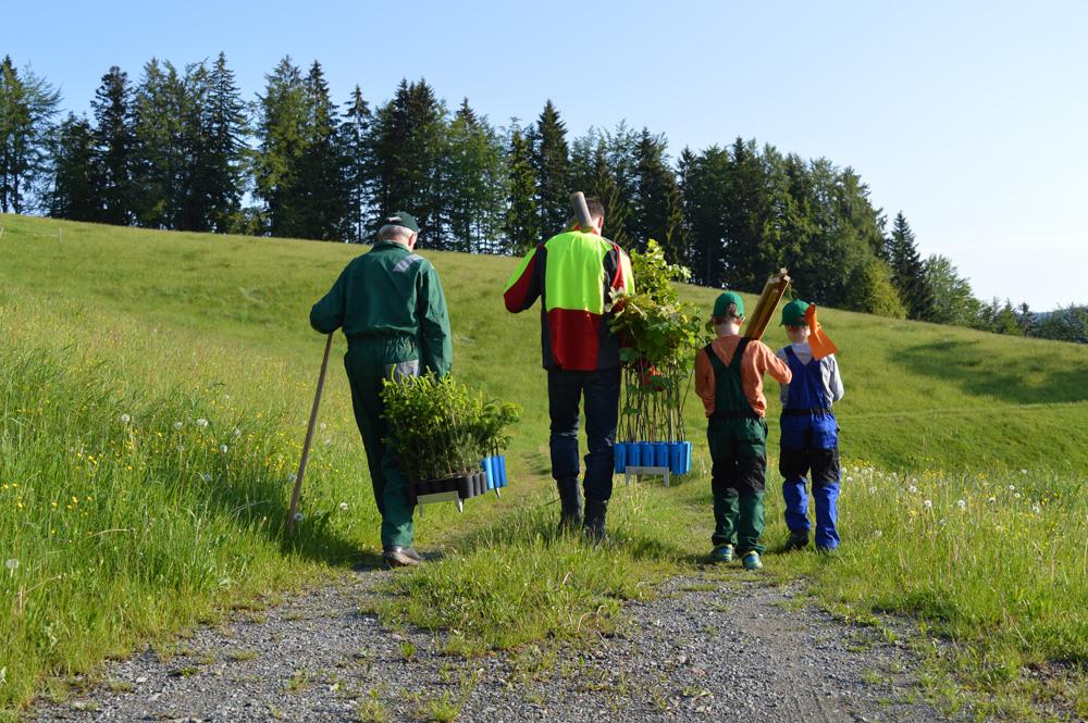Waldbewirtschaftung und Pflege