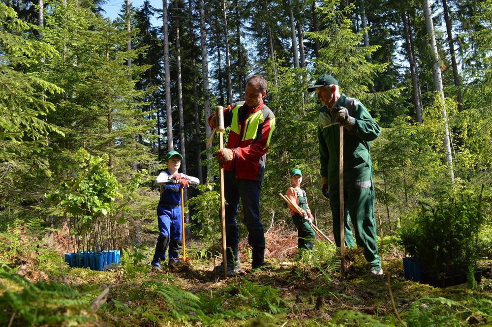 Waldbewirtschaftung und Pflege_1