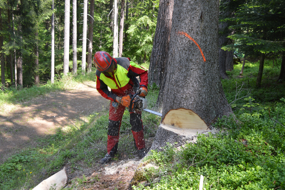 Waldbewirtschaftung und Pflege_5 (1)