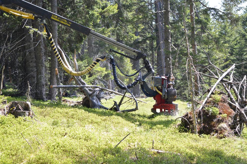 Waldbewirtschaftung und Pflege_6 (1)