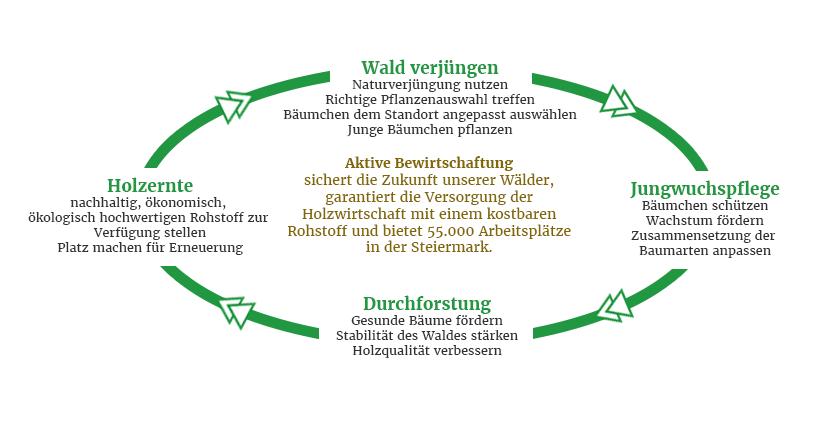 infografik_waldverband_schwerpunkte_01