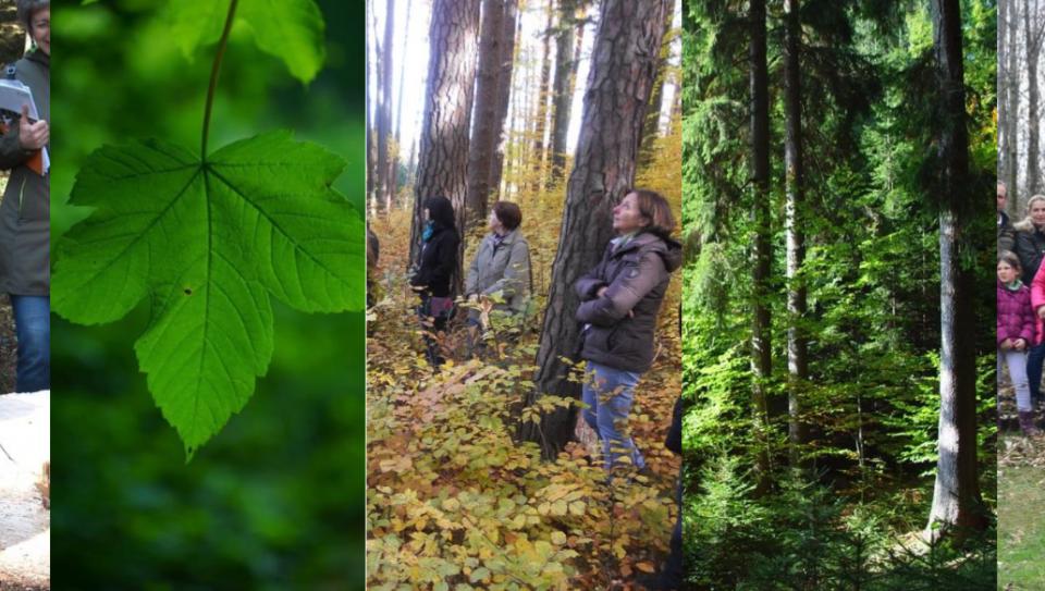 """""""Wald in Frauenhänden""""-Tagung"""